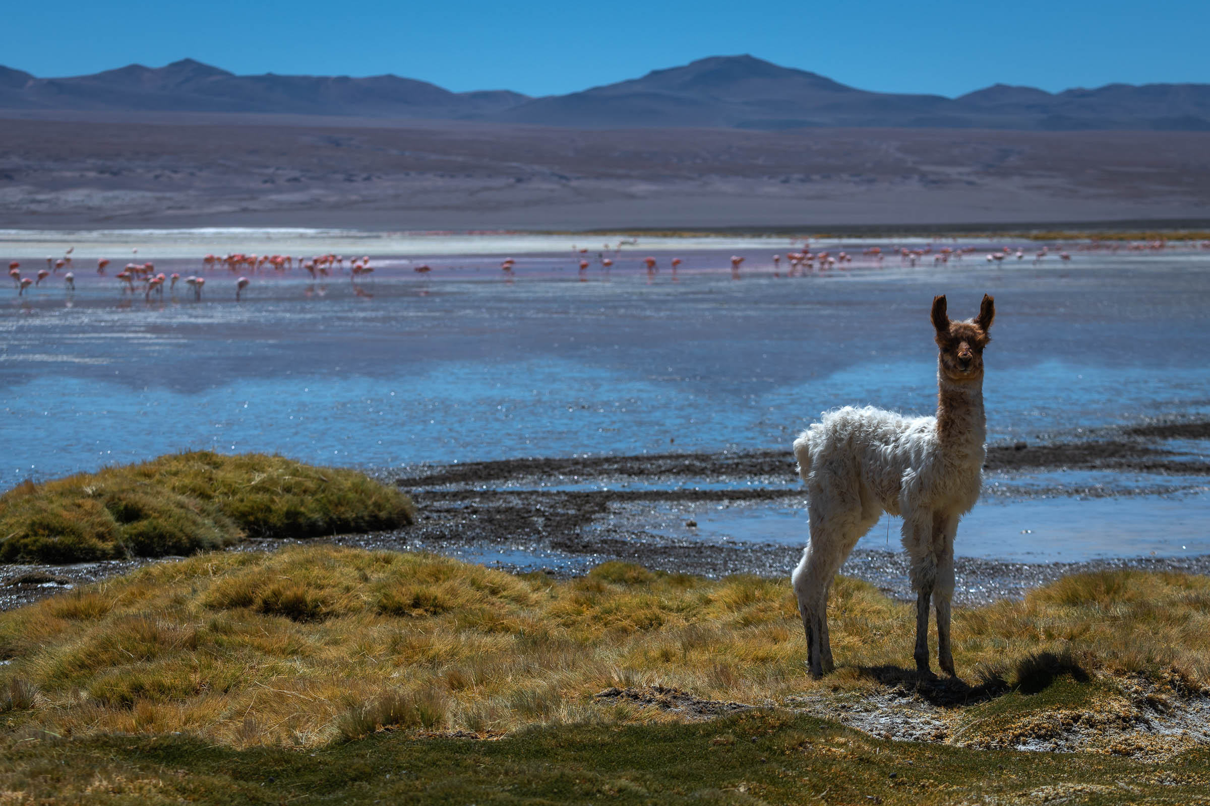 Bolivia Wildlife Olga Finearts Photography Fine Art Prints Stock Images Nature Abstracts Landscapes People Travel Photography
